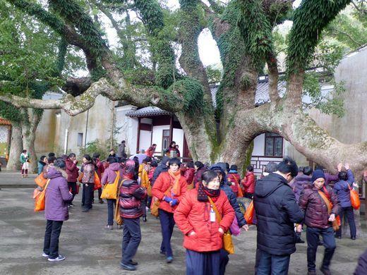 众多游客在参观千年古樟