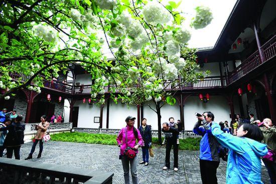 在扬州最吸引人的莫过于琼花