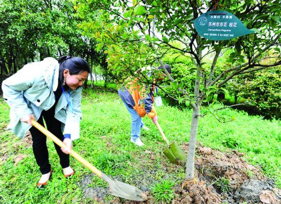 市民大使种植各个城市的市树、市花