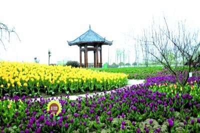 东西湖区郁金香公园