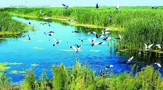 世界最美湿地风景图片