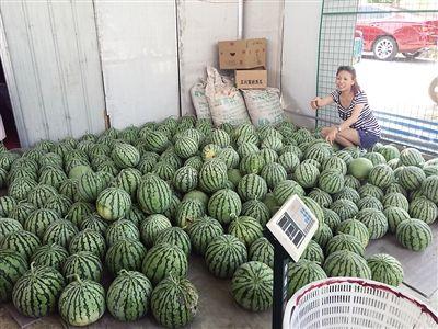 游客选购西瓜。