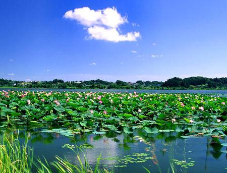 中国金湖荷花美食节