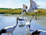 大庆湿地旅游文化节