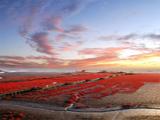 中国盘锦国际湿地旅游周