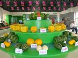 北京大兴西瓜节