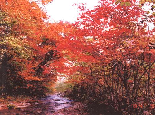 吉林蛟河长白山红叶旅游节