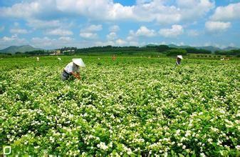 中国国际茉莉花文化节