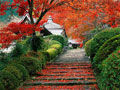北京香山红叶节