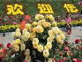 莱州月季花节